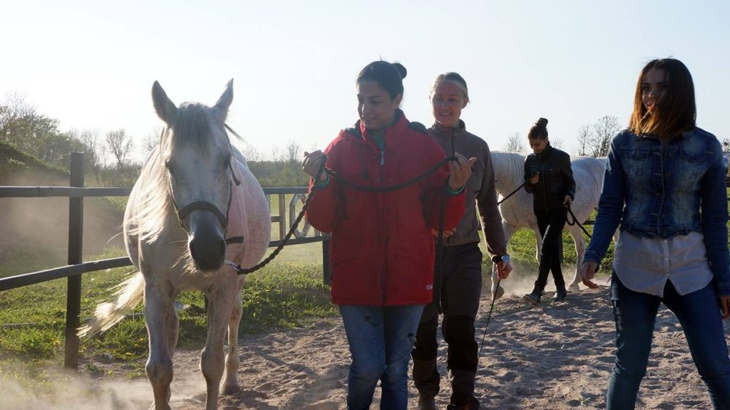 New Horse Culture