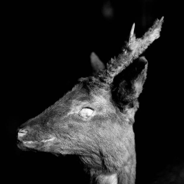 Andrei Liankevich: Dear (elk). Foto: Andrei Liankevich