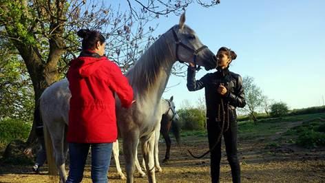 """New Horse Cultures"", studiecirkel, Kultivator"