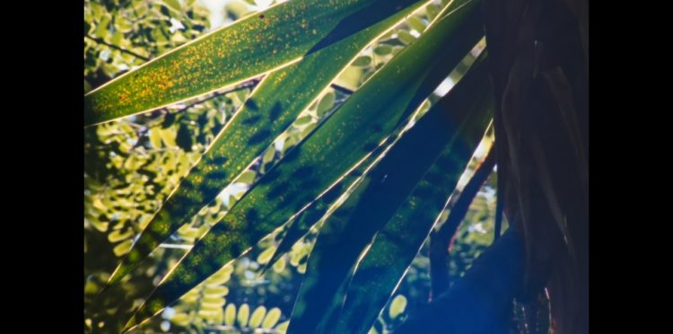 Stillbild ur Vivian's Garden