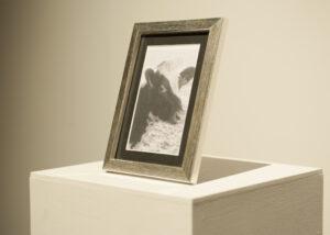 En porträttfotografi av en ko
