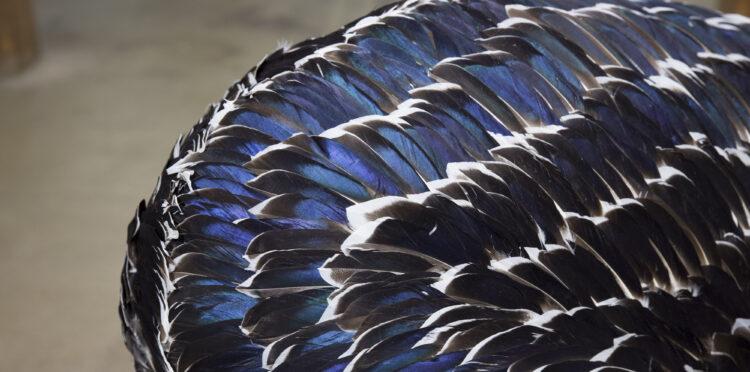 """Närbild på verket """"Dov"""" av glänsande mörkblå fjädrar"""